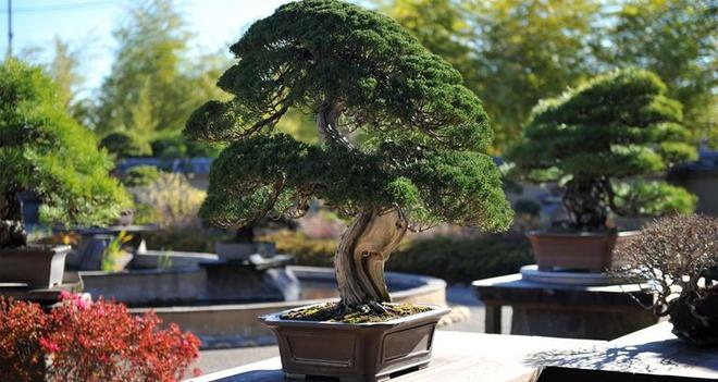 Bậc thầy bonsai Nhật và bí mật của vườn cảnh trăm tuổi được đại gia thế giới ước thèm - Ảnh 8.