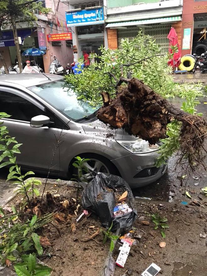 Cây xanh bật gốc, đè ô tô trên đường phố Đà Nẵng - Ảnh 1.