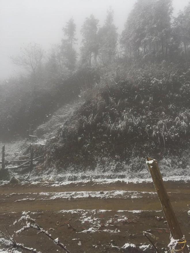 Sa Pa bất ngờ xuất hiện tuyết rơi dày đặc trong sáng nay - Ảnh 1.
