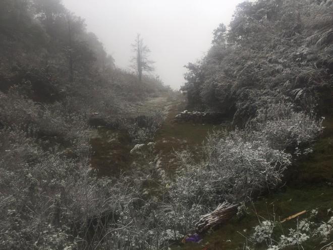 Sa Pa bất ngờ xuất hiện tuyết rơi dày đặc trong sáng nay - Ảnh 2.