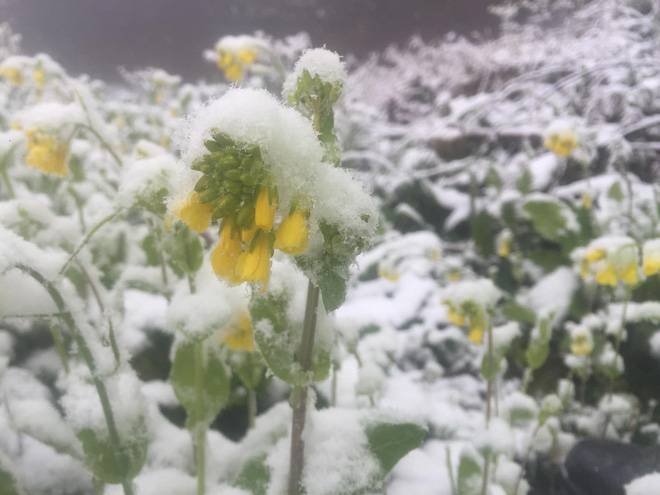 Sa Pa bất ngờ xuất hiện tuyết rơi dày đặc trong sáng nay - Ảnh 6.