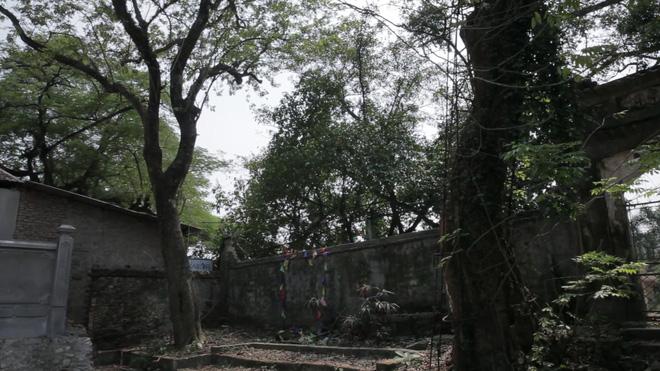 Cây sưa đỏ trăm tỷ ở Hà Nội: Vỏ ngoài sẽ bị cấu nát thành mùn, bán càng sớm càng tốt - Ảnh 6.