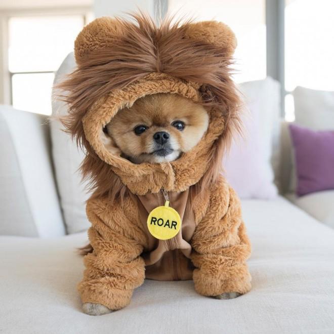Chú chó sở hữu gần 9 triệu follower trên Instagram: Mức cát - xê khủng như sao hạng A, nhẵn mặt với các CEO đình đám - Ảnh 1.