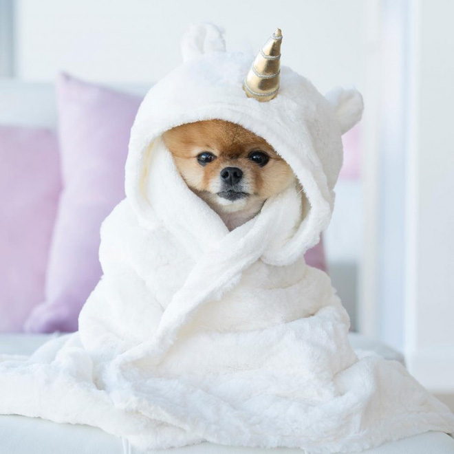 Chú chó sở hữu gần 9 triệu follower trên Instagram: Mức cát - xê khủng như sao hạng A, nhẵn mặt với các CEO đình đám - Ảnh 10.