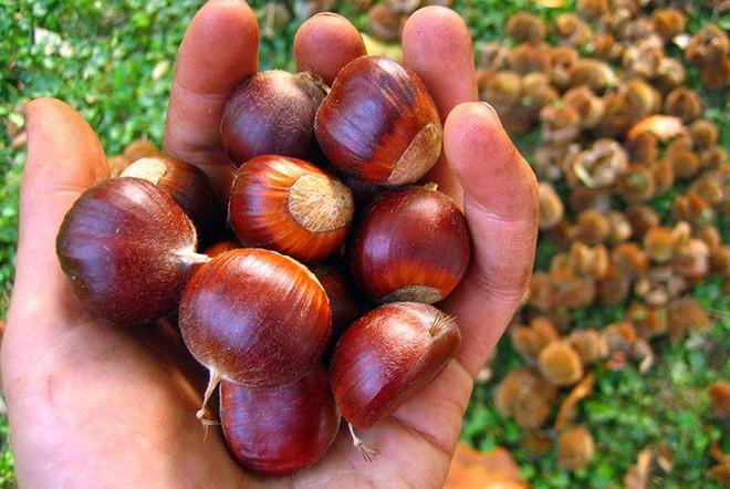 Hạt rừng Việt được Đông y xem là đệ nhất bổ thận: Ngày ăn 1 nắm, khỏe từ trong ra ngoài - Ảnh 3.