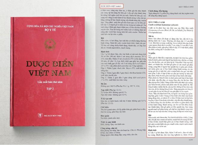 Phát hiện: Cây quý trị tiểu đường mới được ghi vào dược điển Việt Nam - Ảnh 2.
