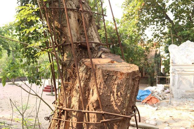 Kỳ án gỗ sưa Chương Mỹ: Đại gia chi 20,5 tỷ đồng mua gỗ điêu đứng, phải bán nhà, bán đất - Ảnh 1.