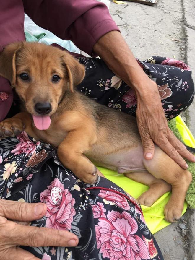 Nụ hôn từ biệt của cụ già và chú chó nhỏ: Câu chuyện không ai cầm được nước mắt giữa phố Sài Gòn - Ảnh 2.