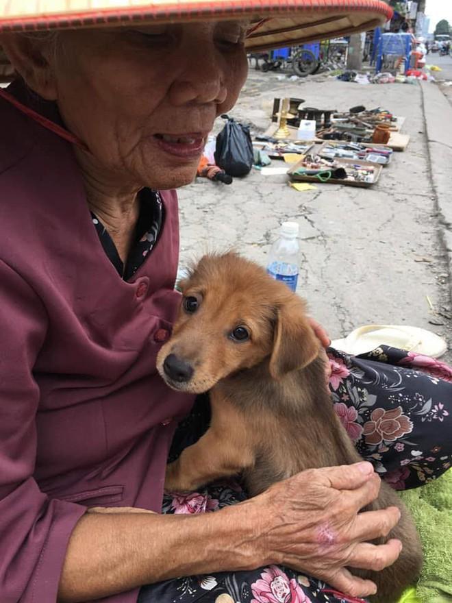 Nụ hôn từ biệt của cụ già và chú chó nhỏ: Câu chuyện không ai cầm được nước mắt giữa phố Sài Gòn - Ảnh 4.