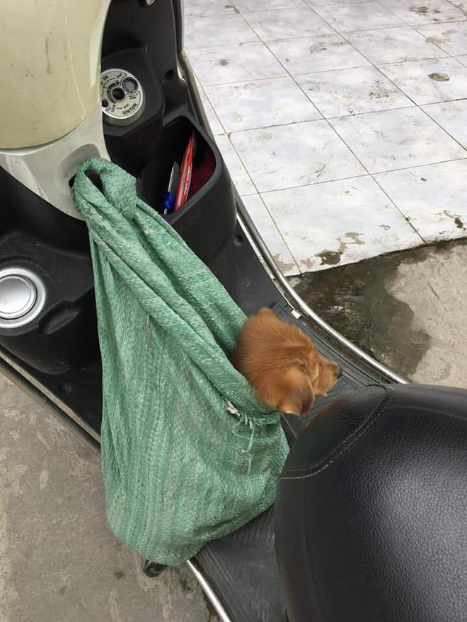 Nụ hôn từ biệt của cụ già và chú chó nhỏ: Câu chuyện không ai cầm được nước mắt giữa phố Sài Gòn - Ảnh 5.