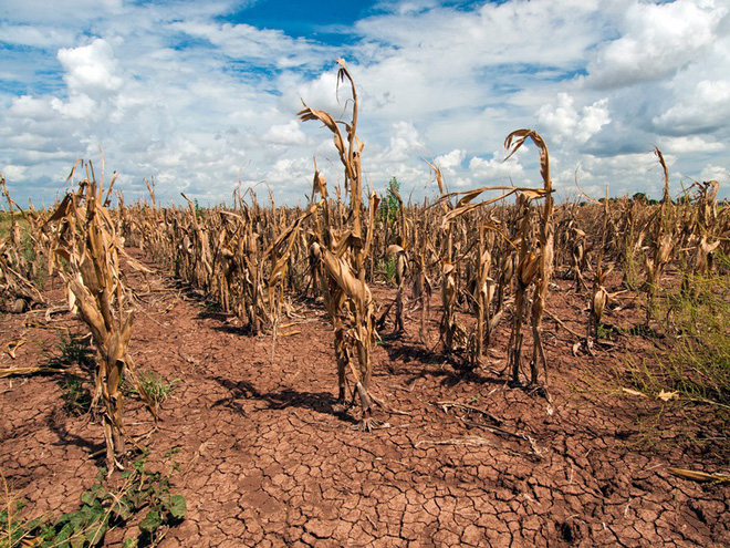 Biến đổi khí hậu khiến các loài côn trùng hung hãn hơn bao giờ hết - Ảnh 4.