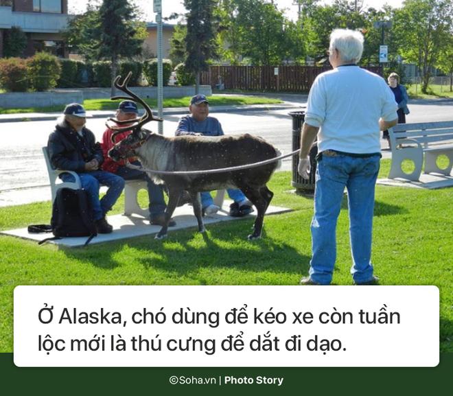 [Photo Story] - Những điều kỳ lạ chỉ có ở Alaska, điều số 5 không dành cho người yếu tim - Ảnh 9.