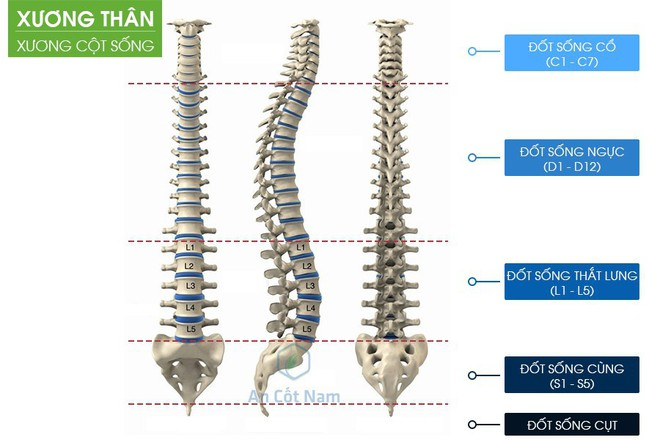 Đau lưng là triệu chứng của bệnh gì? Nguyên nhân và cách chữa hiệu quả - Ảnh 1.