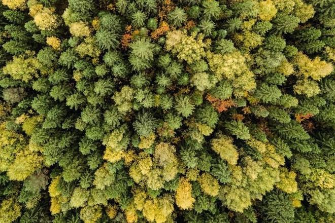 Tháng 10 về, ngắm vẻ đẹp mê ly của mùa thu nước Nga - Ảnh 11.