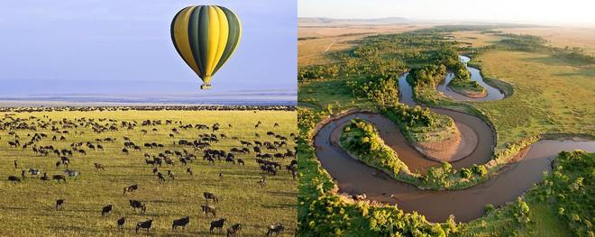 Maasai Mara - đây chính là khu bảo tồn chim rừng tuyệt vời nhất thế giới - Ảnh 1.
