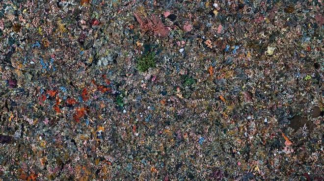 Những bức ảnh Anthropocene: Con người tàn phá Trái đất như thế nào - Ảnh 4.