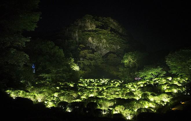 Vẻ đẹp kỳ ảo trong khu rừng thần linh của Nhật Bản - Ảnh 5.