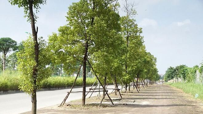 Mãn nhãn với con đường có 10 làn chuẩn bị thông xe ở Hà Nội - Ảnh 9.