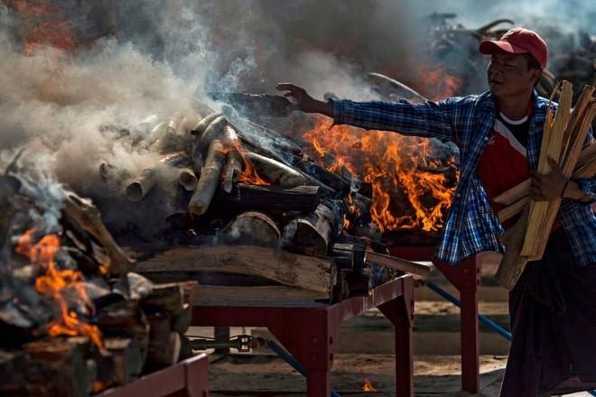 24h qua ảnh: Cá sấu khổng lồ mắc kẹt trong lốp xe ở Indonesia - Ảnh 8.