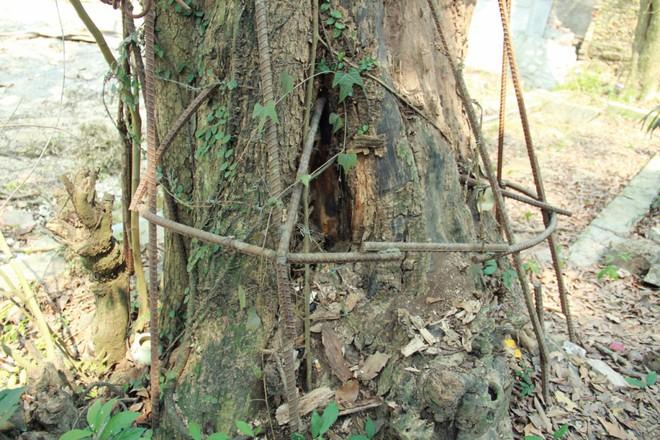 Người chi 26 tỷ mua gỗ cây sưa làng Đông Cốc: Cây sưa 100 tỷ đồng là không tưởng - Ảnh 1.