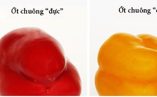 Cách chọn trái cây tươi ngon bạn nên biết
