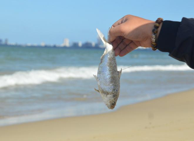 Cá chết trắng chưa rõ nguyên nhân dọc bờ biển Đà Nẵng - Ảnh 4.