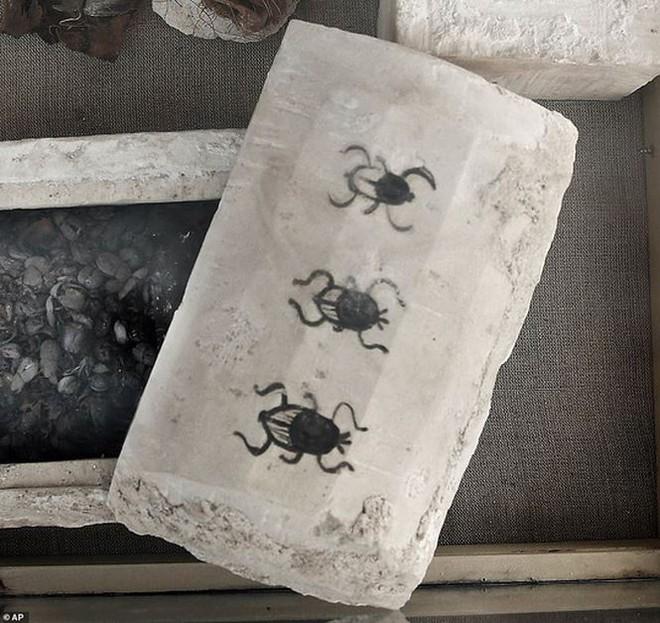 Phát hiện mẻ xác ướp lạ bên trong khu mộ cổ ở Saqqara - Ảnh 1.