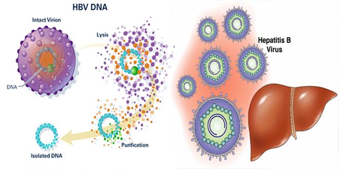 4 yếu tố không ngờ có thể gây viêm gan B: Hầu hết mọi người đều có thể mắc mà không biết - Ảnh 2.