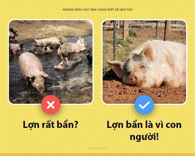 Xin chào! Tôi là một con lợn và các ông chưa biết tôi có thể hay ho đến thế nào đâu - Ảnh 3.