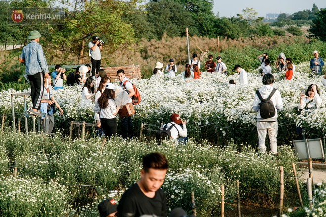Vườn cúc hoạ mi ở Hà Nội thất thủ cuối tuần: 1 mét vuông có chục nhiếp ảnh gia và mẫu - Ảnh 2.