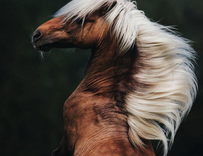 Màn săn mồi nghẹt thở của báo giữa đồng cỏ cháy, đất đen, bụi bặm mịt mù - Ảnh 4.