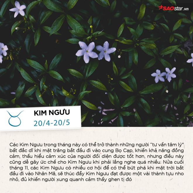 Tháng 11 của 12 chòm sao: Thiên Bình có nhiều mối quan hệ bất ngờ, Kim Ngưu đón cơ hội bứt phá - Ảnh 2.