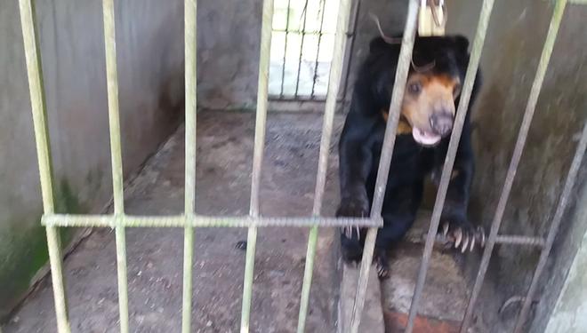 Cận cảnh thú nuôi bị coi là ngược đãi tại vườn thú Công viên nước Củ Chi - Ảnh 18.