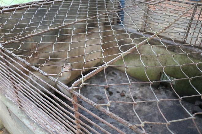 """Công viên nước Củ Chi TPHCM bị """"tố"""" ngược đãi động vật: Lãnh đạo Công viên phản hồi - Ảnh 4."""