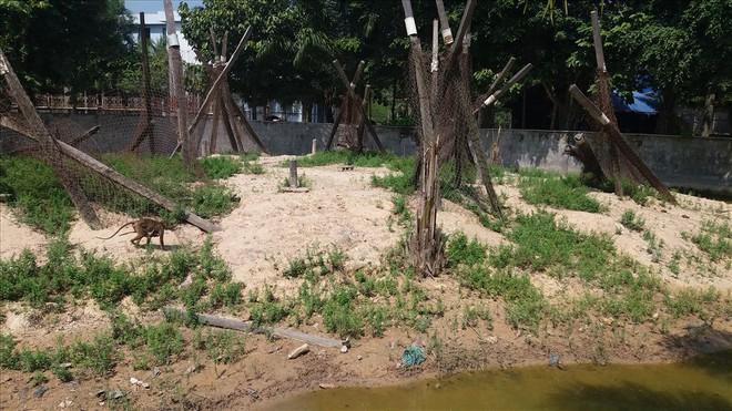 Cận cảnh thú nuôi bị coi là ngược đãi tại vườn thú Công viên nước Củ Chi - Ảnh 5.
