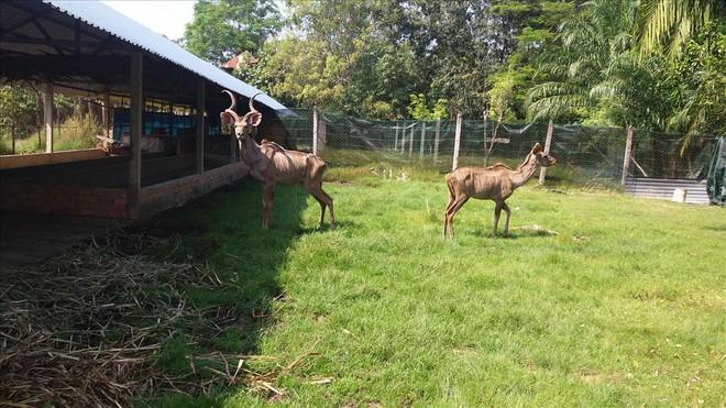 Cận cảnh thú nuôi bị coi là ngược đãi tại vườn thú Công viên nước Củ Chi - Ảnh 6.