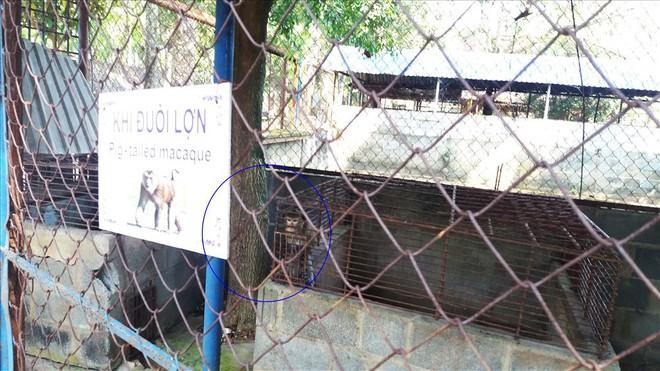 Cận cảnh thú nuôi bị coi là ngược đãi tại vườn thú Công viên nước Củ Chi - Ảnh 9.