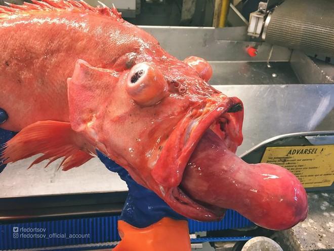 Những quái vật đại dương chưa từng biết khiến bạn kinh ngạc - Ảnh 1.