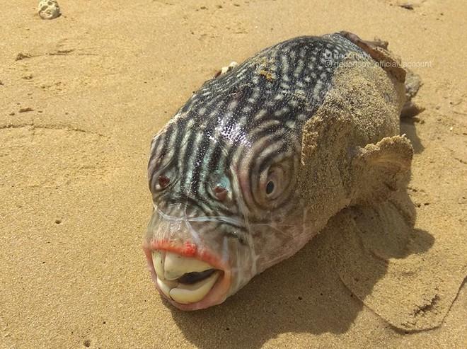 Những quái vật đại dương chưa từng biết khiến bạn kinh ngạc - Ảnh 2.