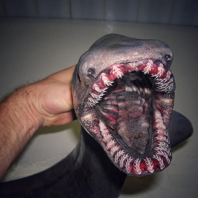 Những quái vật đại dương chưa từng biết khiến bạn kinh ngạc - Ảnh 7.