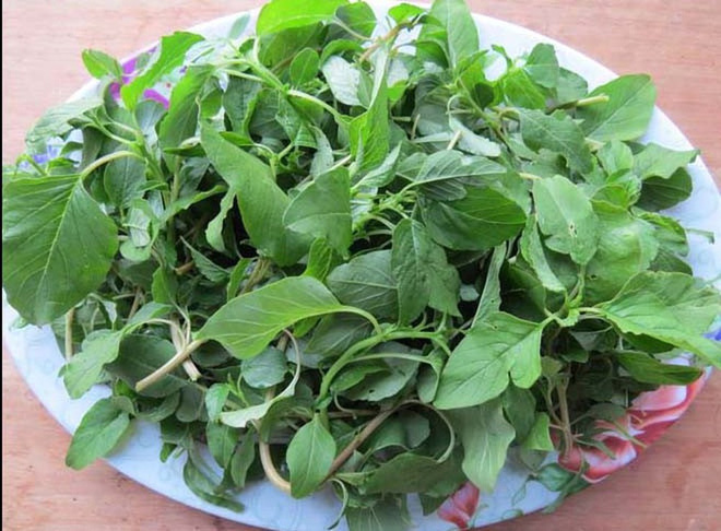 Loại rau giàu canxi được mệnh danh là siêu thực phẩm của xương: Ở Việt Nam giá cực rẻ  - Ảnh 2.