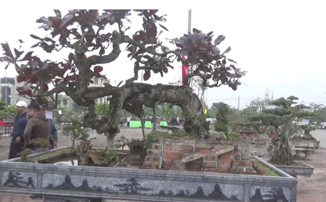 """Bị cáo khai mua đồng hồ hơn 1 tỷ từ bán cây: Vườn cây cảnh ở Nam Định của ông Vĩnh """"khủng"""" cỡ nào?"""