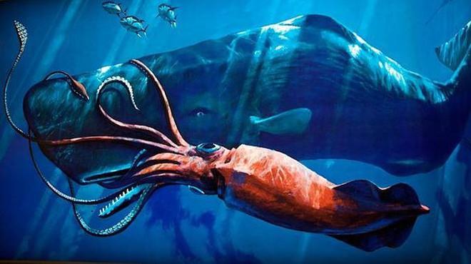 Loài động vật thân mềm to lớn và thông minh nhất biển sâu - Ảnh 1.