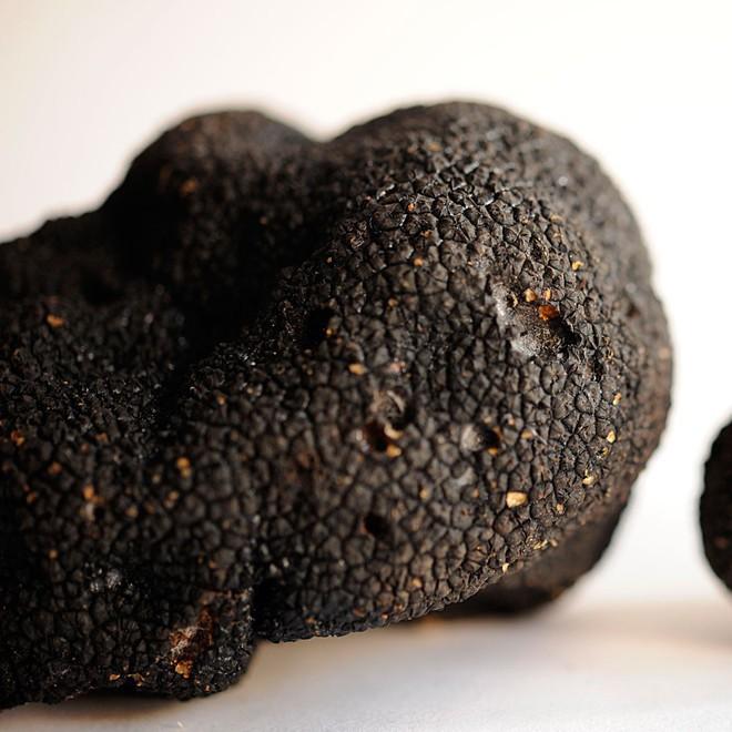 Truffle - loại nấm đắt nhất thế giới, thần dược phòng the, kim cương đen của nền ẩm thực: 140 triệu/kg - Ảnh 2.
