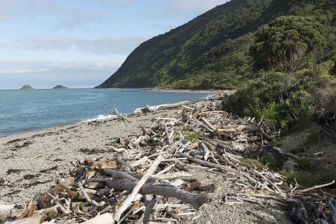 Thiên đường chim hoang dã lộng lẫy bậc nhất chính là hòn đảo này - Ảnh 3.