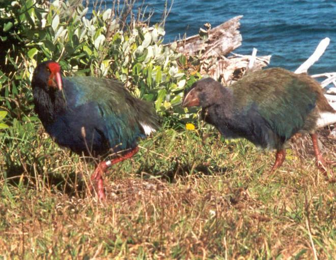 Thiên đường chim hoang dã lộng lẫy bậc nhất chính là hòn đảo này - Ảnh 4.