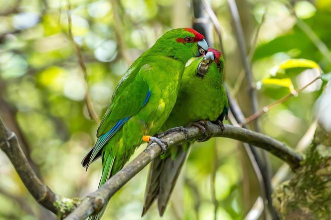 Thiên đường chim hoang dã lộng lẫy bậc nhất chính là hòn đảo này - Ảnh 9.