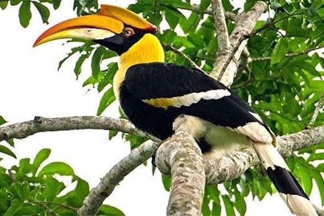 Nếu không ăn nhầm chim Phượng Hoàng Đất, doanh nhân có thể không bị xử lý hình sự - Ảnh 2.