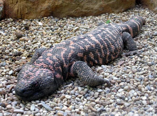 6 loài vật có khả năng thích nghi tuyệt vời nhất trong sa mạc khô cằn - Ảnh 11.
