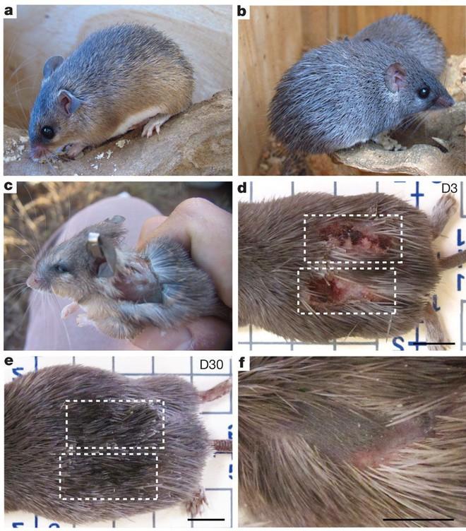 6 loài vật có khả năng thích nghi tuyệt vời nhất trong sa mạc khô cằn - Ảnh 7.